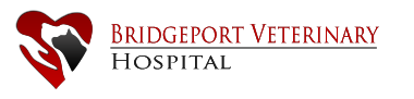Bridgeport Vet Hospital: CT Animal Health Services, Pet Hospital in Connecticut, Veterinary Hospital in Bridgeport, Connecticut. Fairfield County Vet Hospital,  Fairfield County Veterinary.  Fairfield County Vet,  Fairfield County Vet Hospital